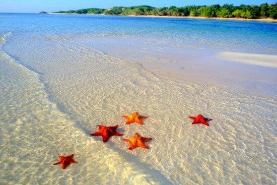 estrellas de mar en la orilla