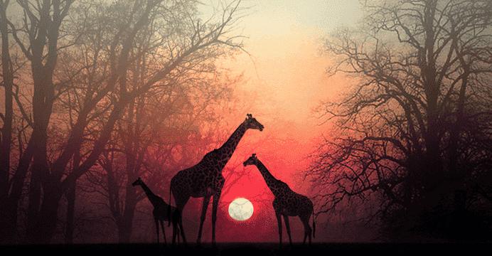 """Dale un momento a tu alma para que te alcance"", un hermoso relato africano"