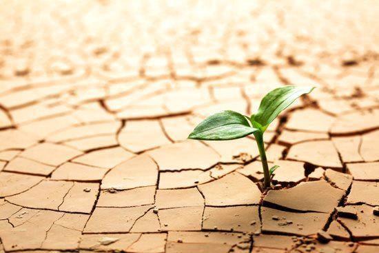 Planta en medio del desierto diciendo no te rindas