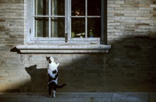 Gato mirando por la ventana