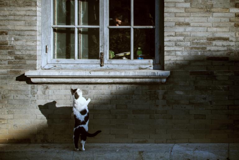 ¡Que la curiosidad haga vivir al gato!