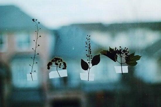 hojas pegadas a un cristal