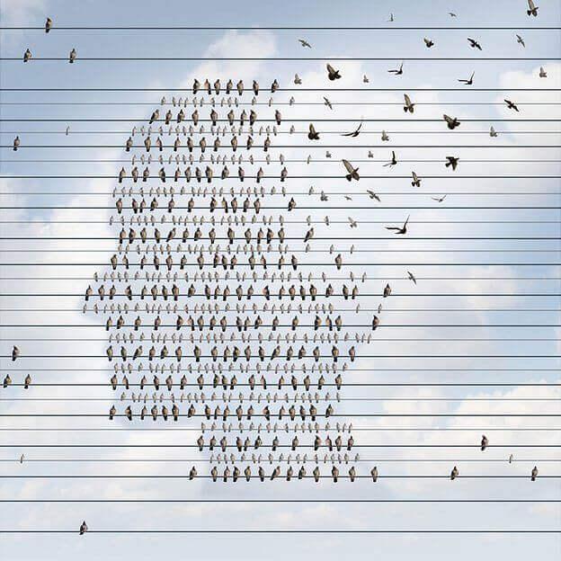 Pájaros haciendo la forma de una cabeza humana
