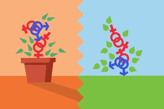 Símbolos de mujer y hombre