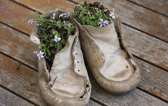 zapatos viejos con flores dentro