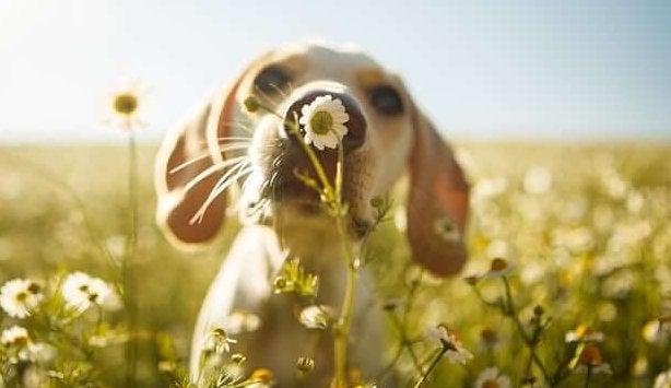 Perro oliendo una flor