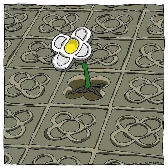 Flor en el suelo