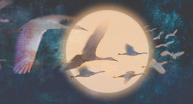 garzas en la luna