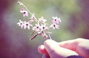 mano sosteniendo flor en un acto de bondad