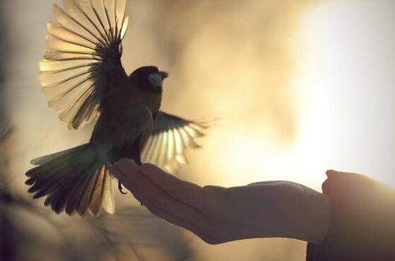 Mano sosteniendo pájaro