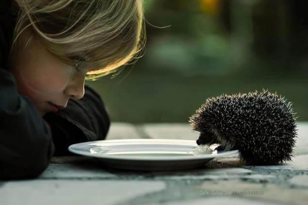 niño dando de comer a un erizo