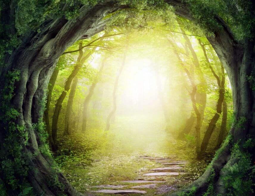 Camino en el bosque por donde van las personas autorrealizadas