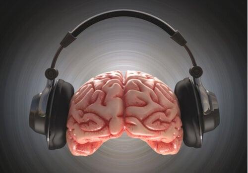 Cerebro con cascos de música