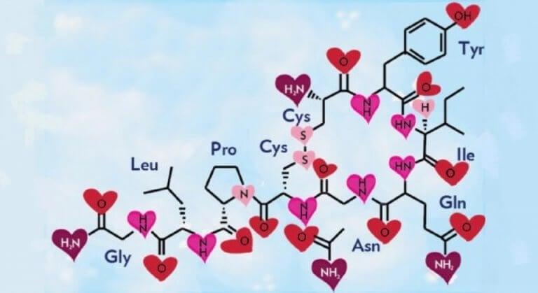Oxitocina en el cerebro moral