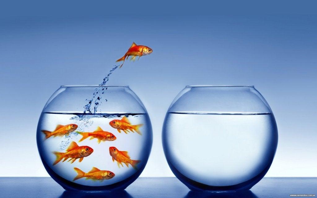 pez saltando a otra pecera en busca de su creatividad