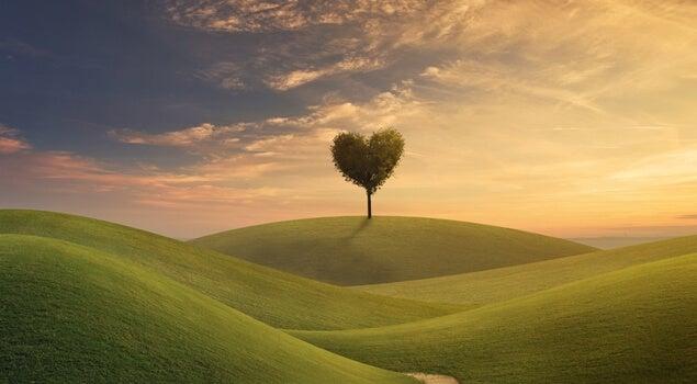 árbol en forma de corazón representando qué qué hacer con tu vida