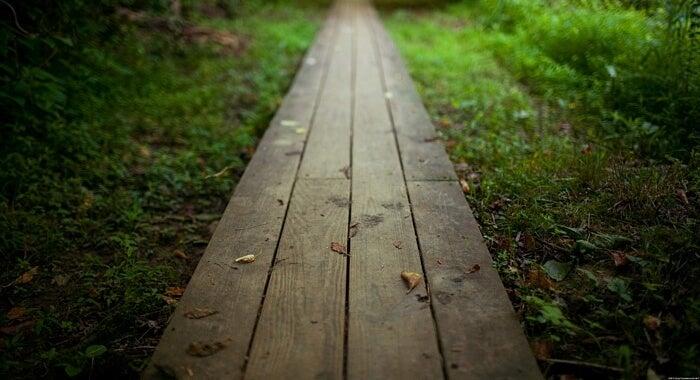 Camino hacia el bosque de el helecho y el bambú