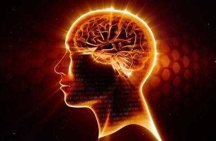 cerebro sano gracias al omega-3