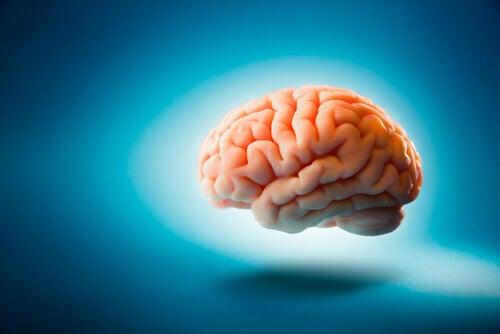 6 curiosidades sobre el cerebro que tal vez no sabías