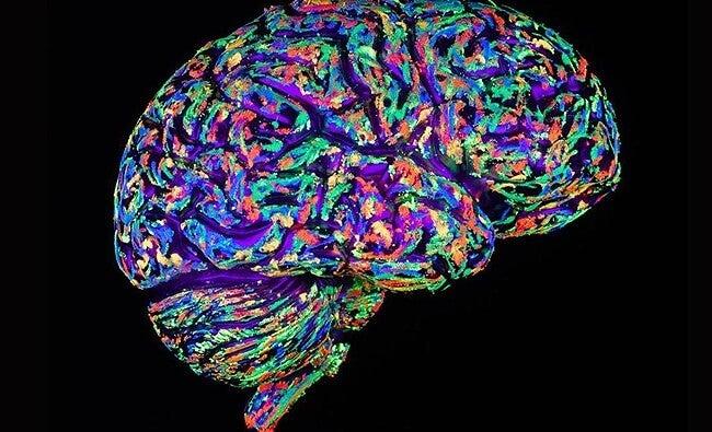 ¿Cómo reacciona el cerebro ante la ausencia de un ser querido?