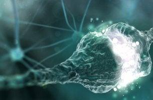 Ejemplo de sinapsis