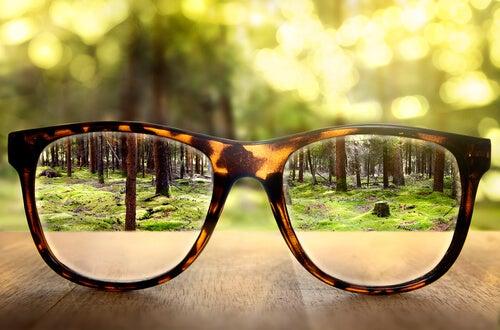gafas enfocando a un bosque