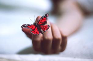 mano con mariposa representando la esperanza contenida en los Los libros para superar la depresión