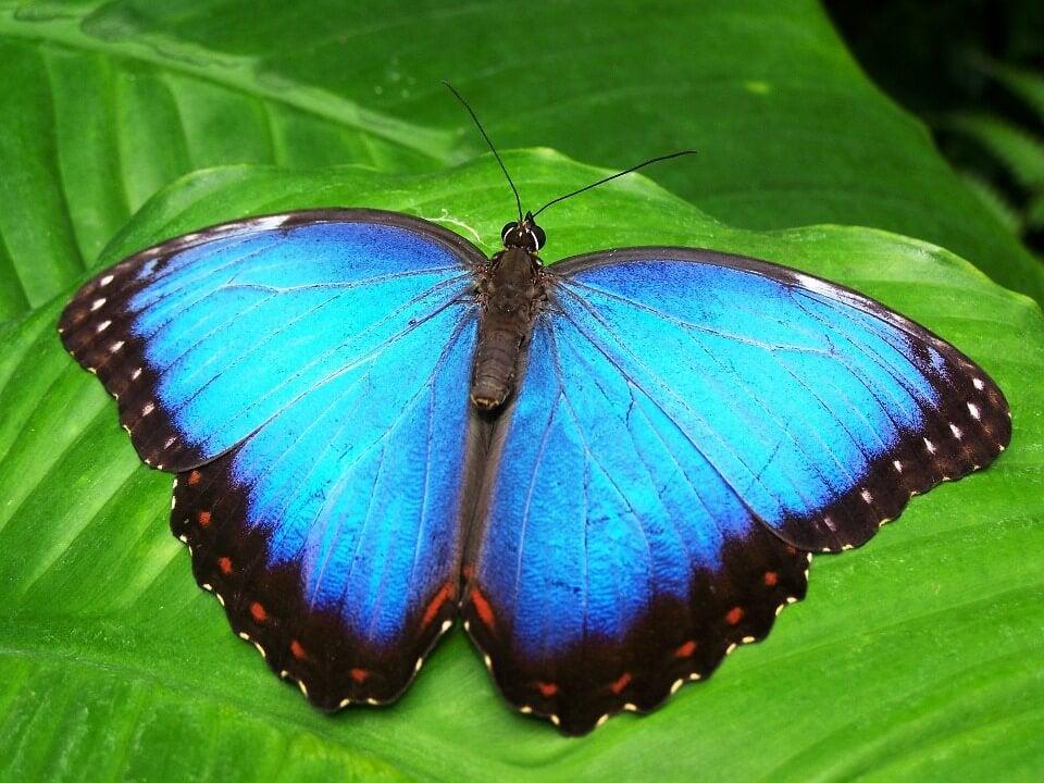 Mariposa azul como símbolo del cuento de transformación