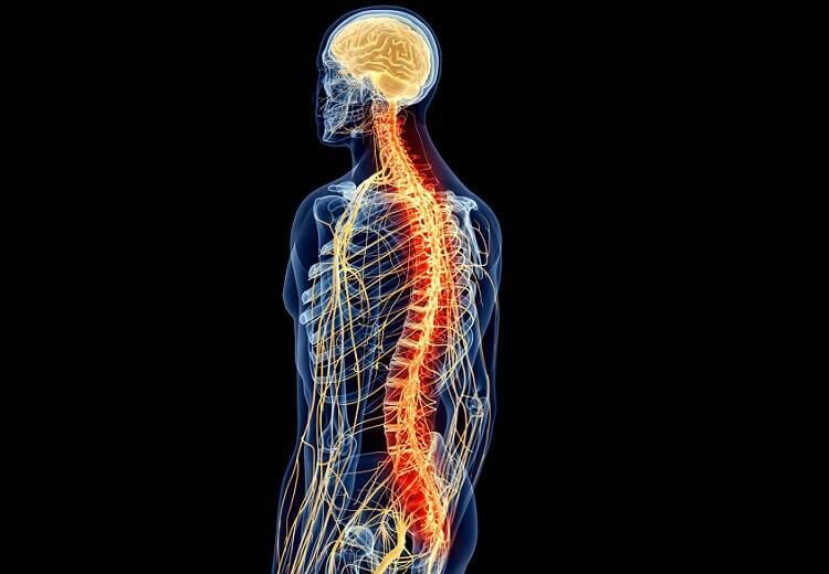 Médula espinal coloreada en un hombre