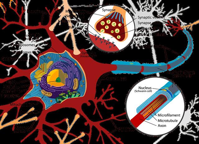 propiedades de la sinápsis