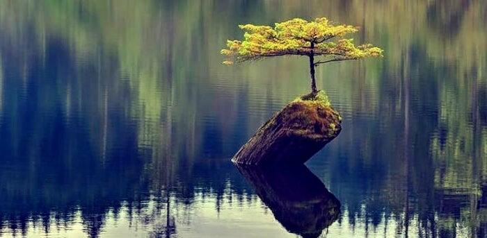 árbol creciendo en un lago representando la magia de la neurobiología de la resiliencia
