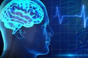 cerebro con electrocardiograma representando la salud cerebral
