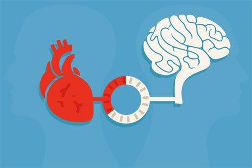 órganos simbolizando la coherencia cardíaca