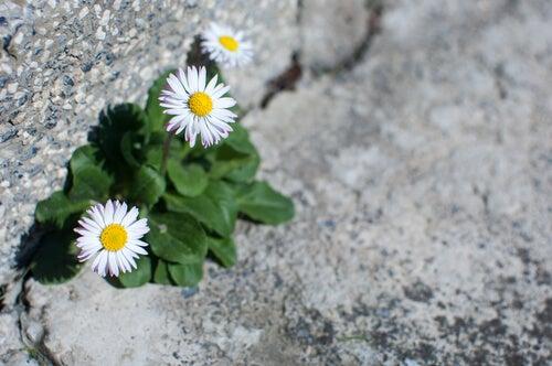 Flores en carretera representando la adversidad