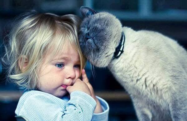 Gato acariciando a una niña