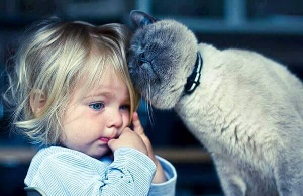 Gatoterapia: 5 beneficios de vivir con un gato