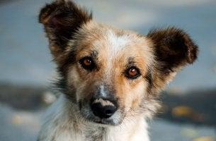 imagen representando historia del perrito curioso