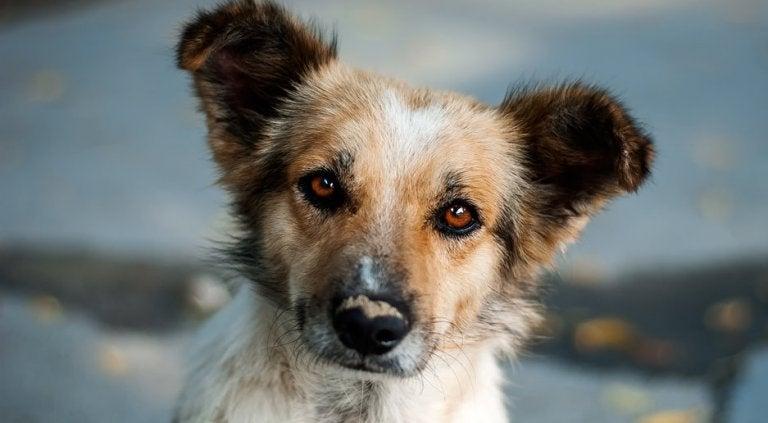 El perrito curioso, un hermoso relato del destino