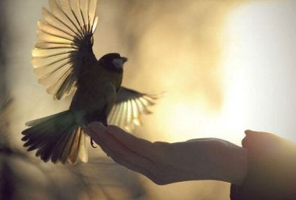 Mano con pájaro simbolizando cinco preceptos de la ética budista