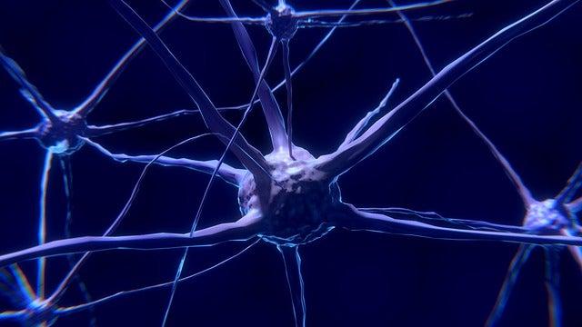 La neurona: características y funcionamiento