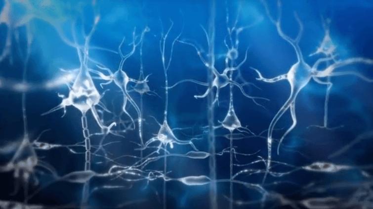 células nerviosas formando engramas