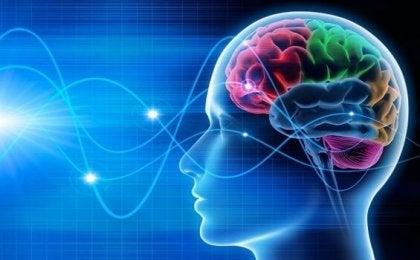 Ondas del cerebro de una persona