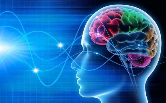 cerebro en la fase REM