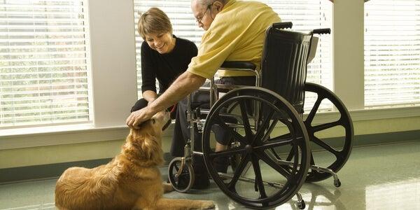 Persona en silla de ruedas haciendo terapia con perros