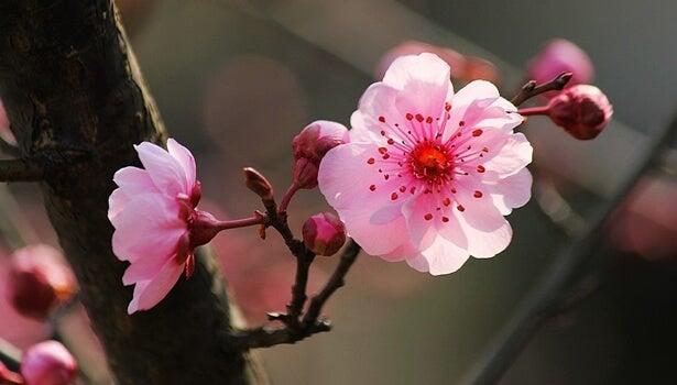 Las 5 claves de la psicología japonesa