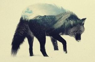 Lobo para representar la novela el lobo estepario