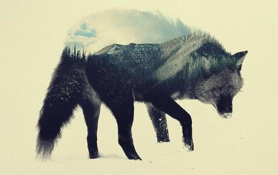 El lobo estepario, una obra para reflexionar