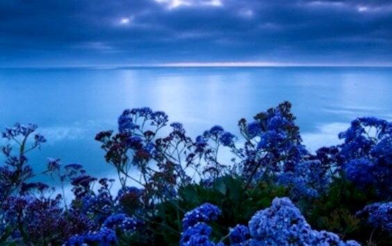 El color que reduce el estrés: la tonalidad de la calma