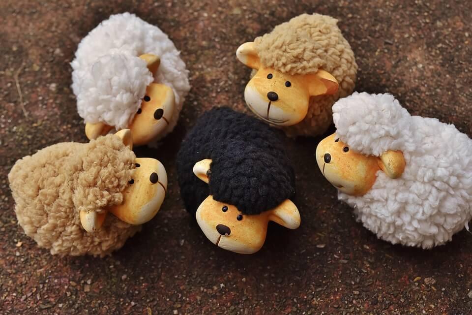 normas-sociales-oveja-negra