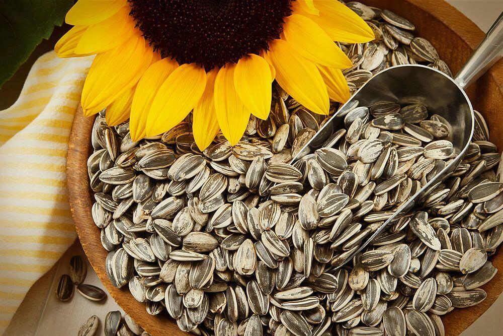 semilla de girasol, uno de los alimentos que aumentan la serotonina y la dopamina